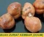 Jual Buah Zuriat untuk Ikhtiar Hamil