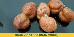 jual buah zuriat doum ikhtiar hamil